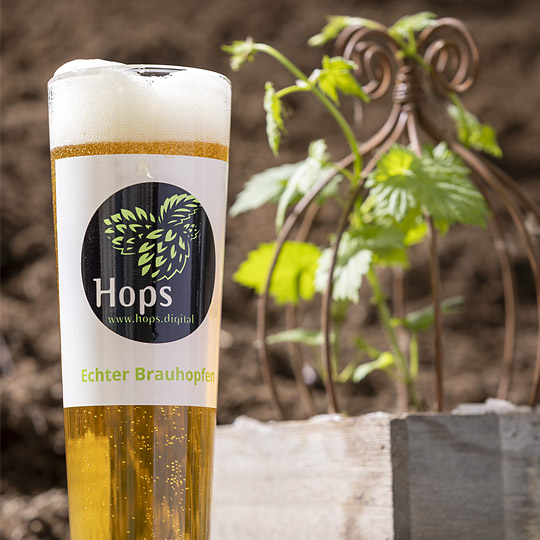 "HopfenStarter-Set ""Hops"""